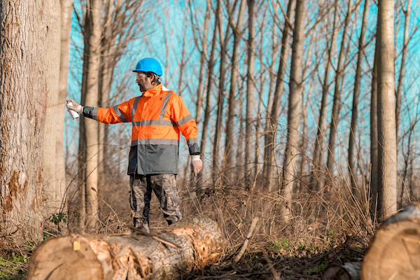 forestry surveying insurance